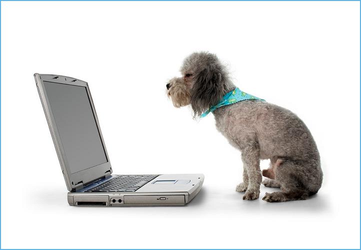 Dog Love Computers
